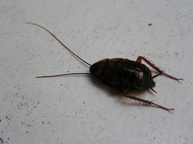 Femeie ucisă de gândacii de bucătarie. Cum a fost posibil așa ceva