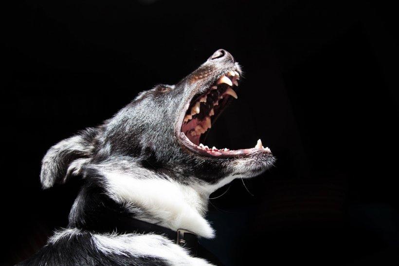Un bătrân din Hunedoara, ucis de câinii unui vecin. Omul a fost găsit într-o baltă de sânge
