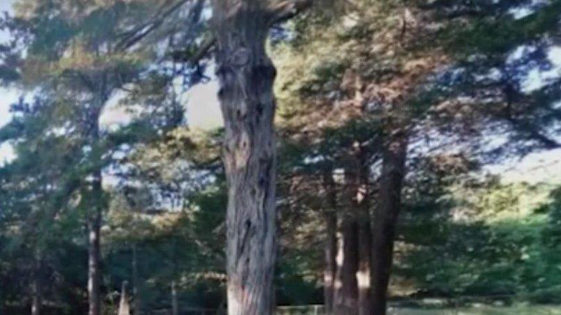 Sfârșit tragic pentru un bărbat din Vaslui. A fost strivit de un copac din curte
