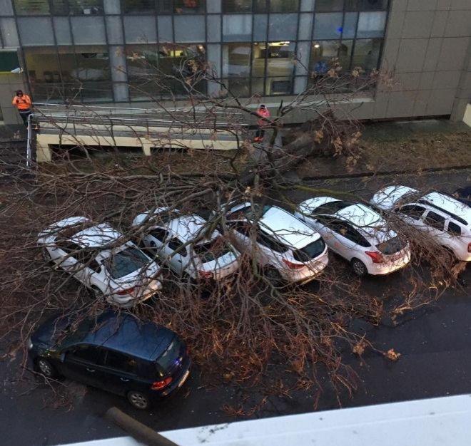 Copac căzut peste șase mașini în Constanța, din cauza viscolului