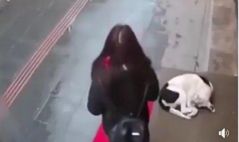 A zărit un câine pe stradă, în timp ce afară ploua infernal. Ce a putut să facă această femeie a impresionat o lume întreagă VIDEO
