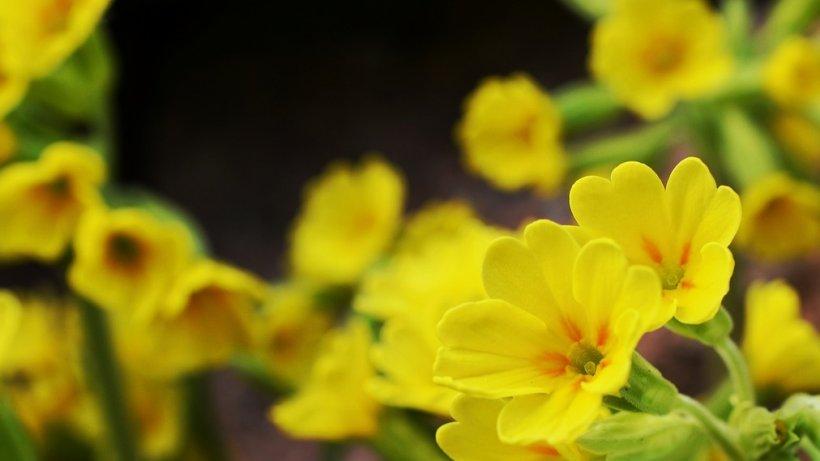 Planta care înlocuieşte aspirina. Cum poţi prepara un adevărat medicament natural