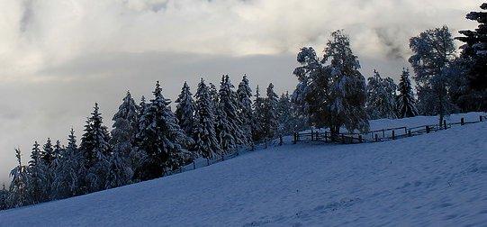 Atenție, turiști! Pe traseele montane există riscul prăbuşirii copacilor încărcaţi cu zăpadă