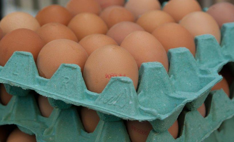 Alertă alimentară! Peste 300 de mii de ouă contaminate cu otravă de purici au fost vândute în Capitală și alte patru județe