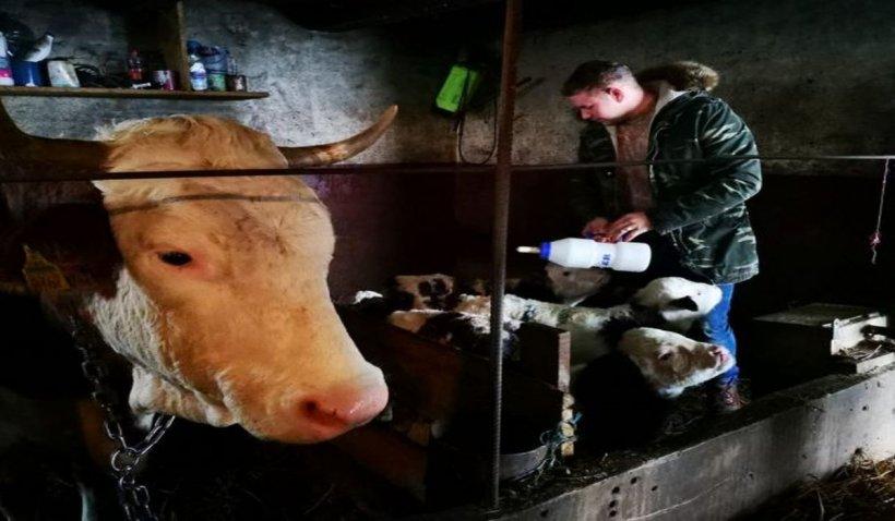 """Adrian avea o vacă în curte. Într-o dimineață, a observat ceva ciudat la animal. Când a intrat în grajd, și-a făcut cruce. """"Din animal, ieșeau unul după altul. Nu am mai văzut niciodată așa ceva!"""""""