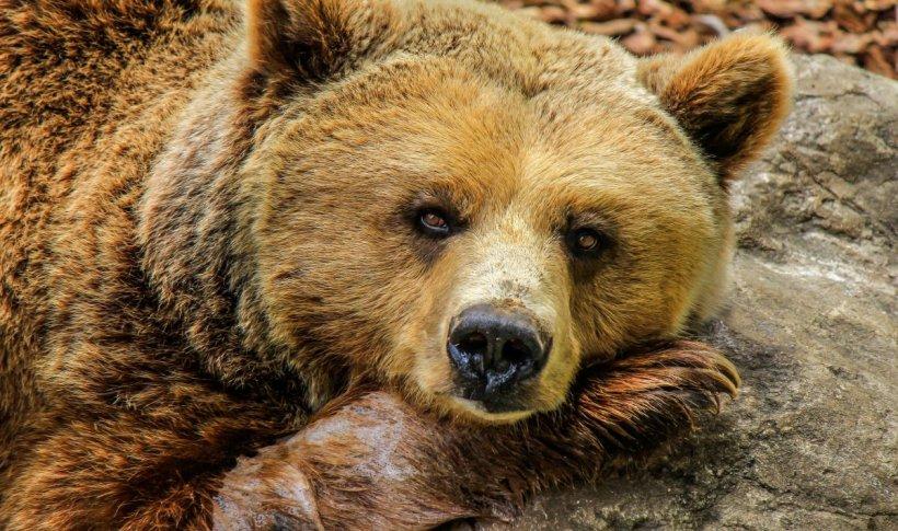 A stat două zile afară în frig și a supraviețuit ca prin minune. Copilul de trei ani a fost protejat de un urs în tot acest timp