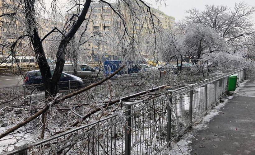 MAI, bilanț după vremea severă. Peste 360 de mașini avariate de copacii căzuți