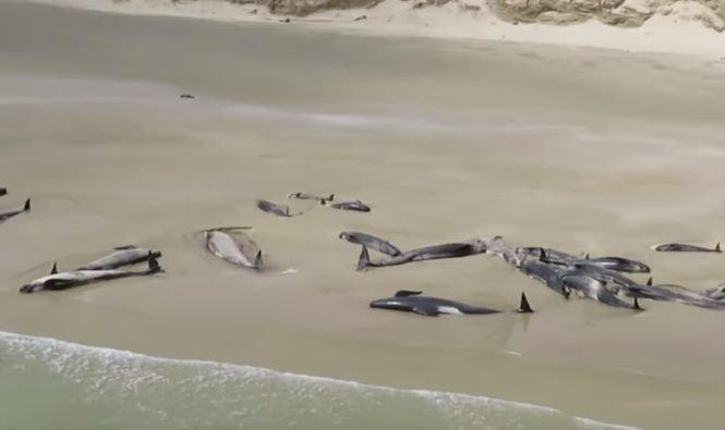 Descoperire șocantă în Germania. Au fost găsite moarte pe plajă. Corpul lor era plin de plastic și resturi de automobile