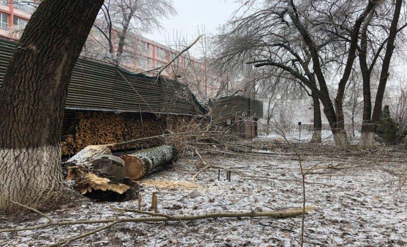 Incident în Capitală. Un copac a căzut peste o cafenea de lux VIDEO