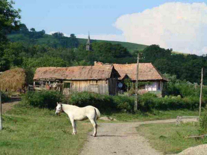 Satul din România decimat de un criminal necunoscut