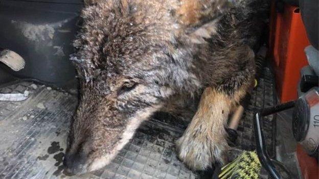 """Au zărit un câine simpatic, înghețat în apă. L-au salvat și l-au dus de urgență la veterinar. Când l-au văzut, medicii s-au speriat. Ce semne avea animalul: """"Doamne, a dormit chiar pe picioarele mele!"""""""