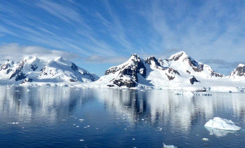 Studiu alarmant. Ce se întâmplă cu focile şi balenele din zona arctică