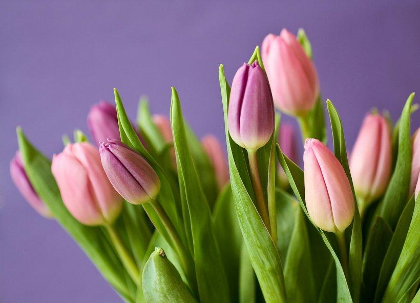 Felicitări 8 Martie. Cum poți să îți surprinzi iubita în cel mai frumos mod
