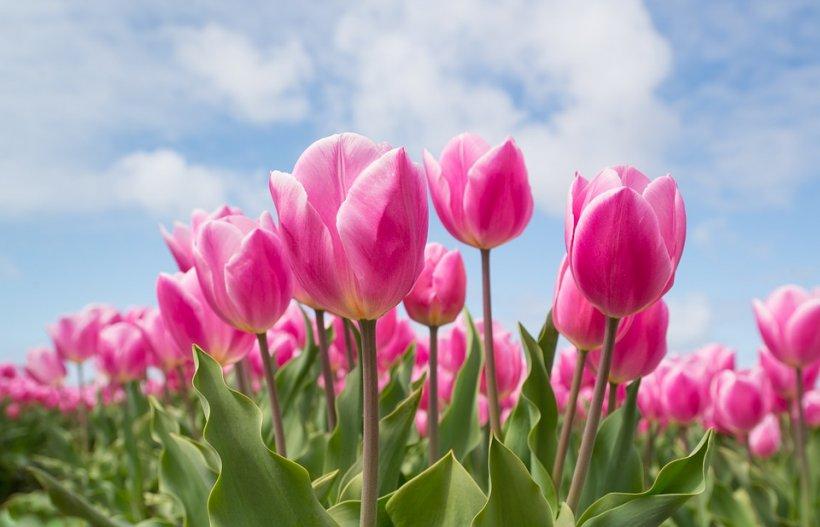 VREMEA. Prognoza meteo pentru 8 martie. Vești minunate de la meteorologi