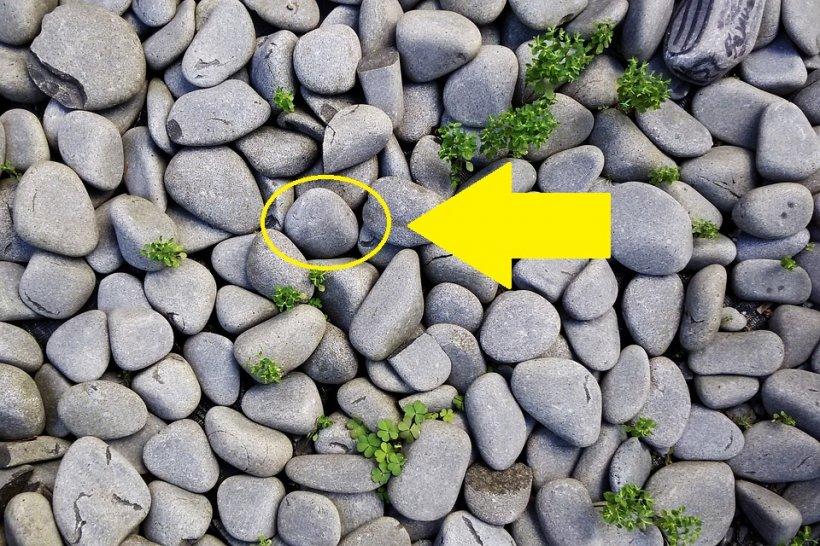 Atenție! Cum îți intră hoții în casă folosind o simplă piatră. Nu, nu sparg geamurile cu ea! E o metodă mult mai inteligentă!