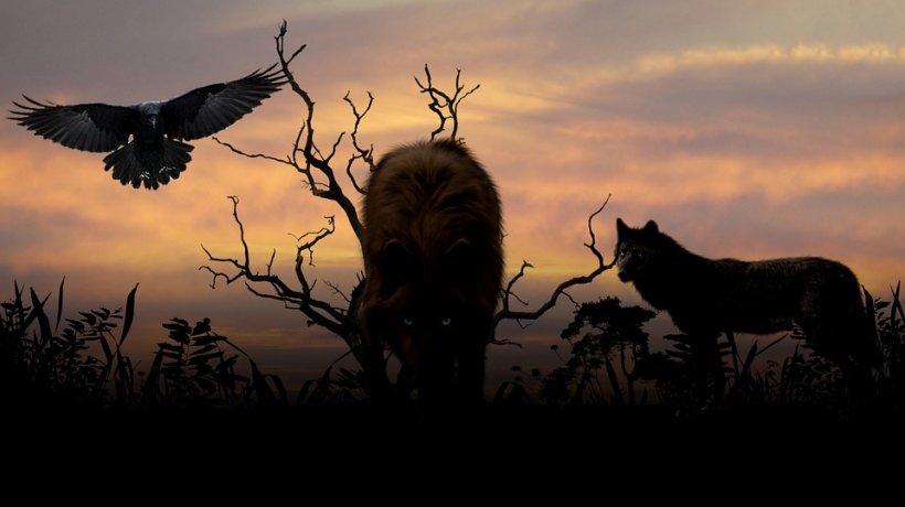 Un cioban s-a trezit într-o noapte cu patru lupi lângă țarcul oilor. E incredibil ce le-a dat. După câteva zile, păzeau oile împreună cu câinii