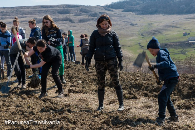 Banca Transilvania alături de Tăşuleasa Social şi Asociația Mai Mult Verde organizează o acțiune de împădurire în localitatea Sânmihaiu de Câmpie din județul Bistrița-Năsăud. LIVE VIDEO (P)