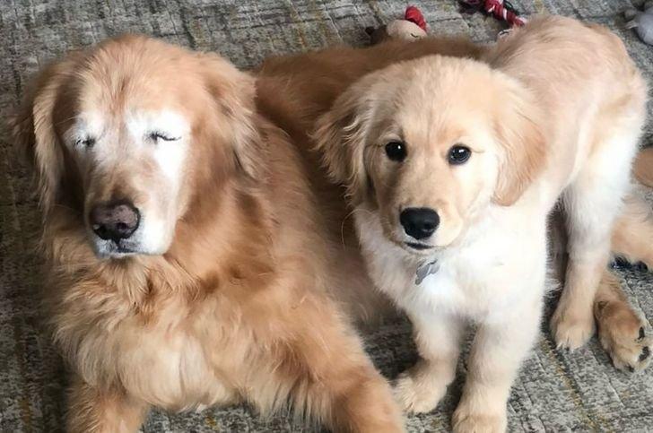 """Câinele și-a pierdut ochii din cauza unui glaucom, dar apoi ceva incredibil s-a întâmplat. """"Este cel mai bun ajutor pentru el"""""""