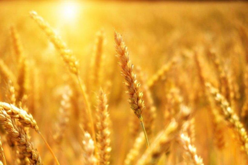 Cei mai mari 10 exportatori români de cereale