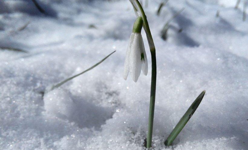 VREMEA. Vine un val de frig, lapoviță și ninsori
