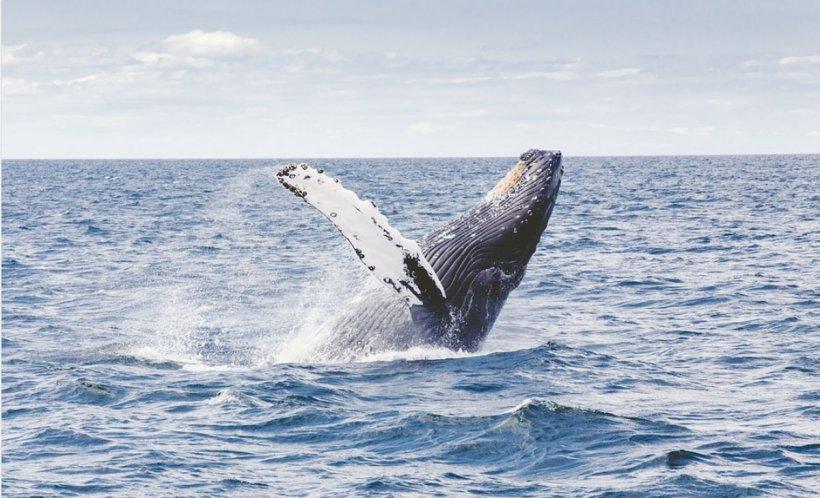Fosilele unei balene de mai bine de 42 milioane de ani au fost descoperite în Peru