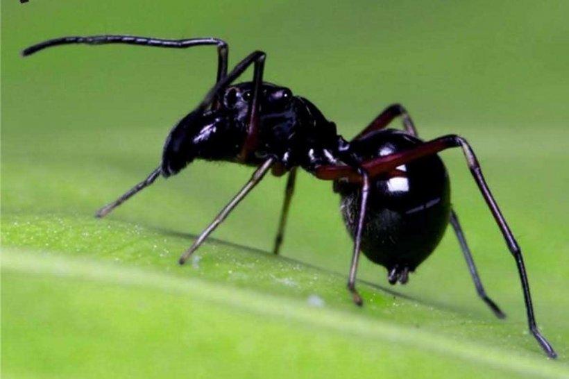 Oamenii de știință au descoperit o nouă specie de păianjen care își alăptează puii