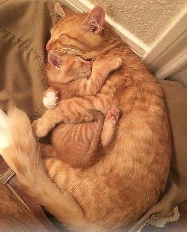 """Nu știa unde este pisica ei, așa că a început să o caute prin casă. Când a găsit-o, a făcut imediat această fotografie. """"Este incredibil"""" (FOTO)  16"""