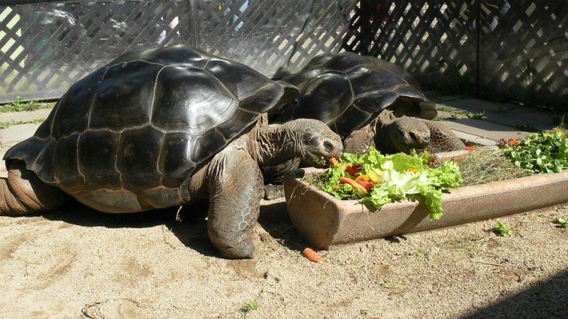 Două țestoase s-au iubit enorm timp de 100 de ani, dar într-o zi ceva cu totul neașteptat s-a întâmplat. Toți au înțeles că e momentul despărțirii