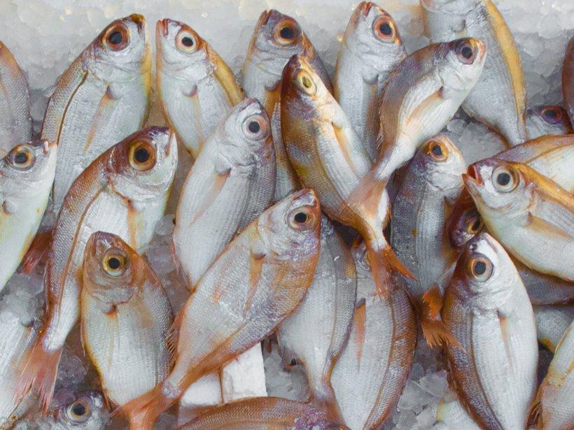 FLORII, obiceiuri și tradiții. De ce se mănâncă pește pe 21 aprilie