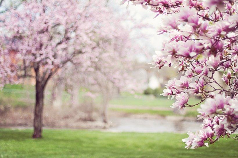 VREMEA. Prognoza meteo pentru Florii și Paște