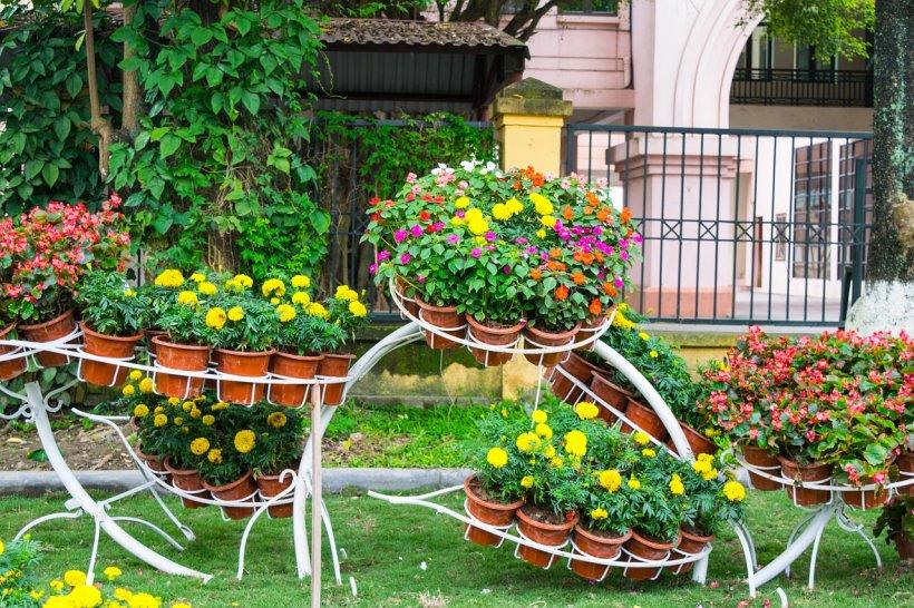 Agricool. Cât costă să vă decorați grădina. Avem toate prețurile