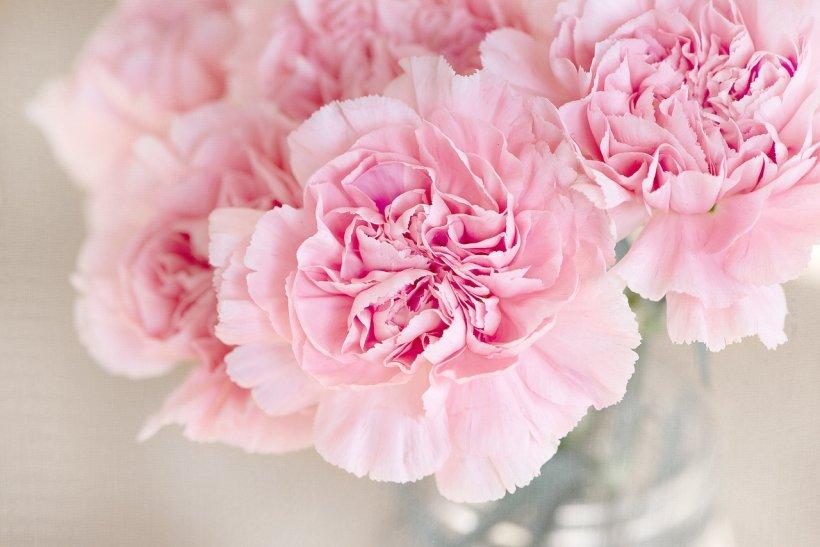 Florii 2019. Ce trebuie și ce nu trebuie să faci de Florii. Explicaţiile unui preot român