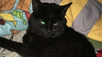 Își găsiseră pisica moartă pe stradă și au îngropat-o. Au plâns o noapte întreagă după felină. A doua zi, au încremenit când au înțeles ce se întâmplase (FOTO)