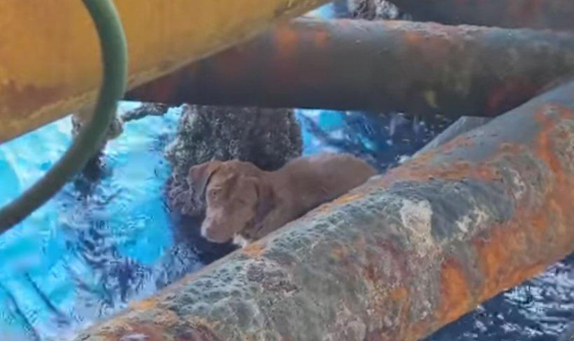 Câinele a supraviețuit miraculos, după ce a fost găsit în mare, la 220 de kilometri distanță de țărm (VIDEO)