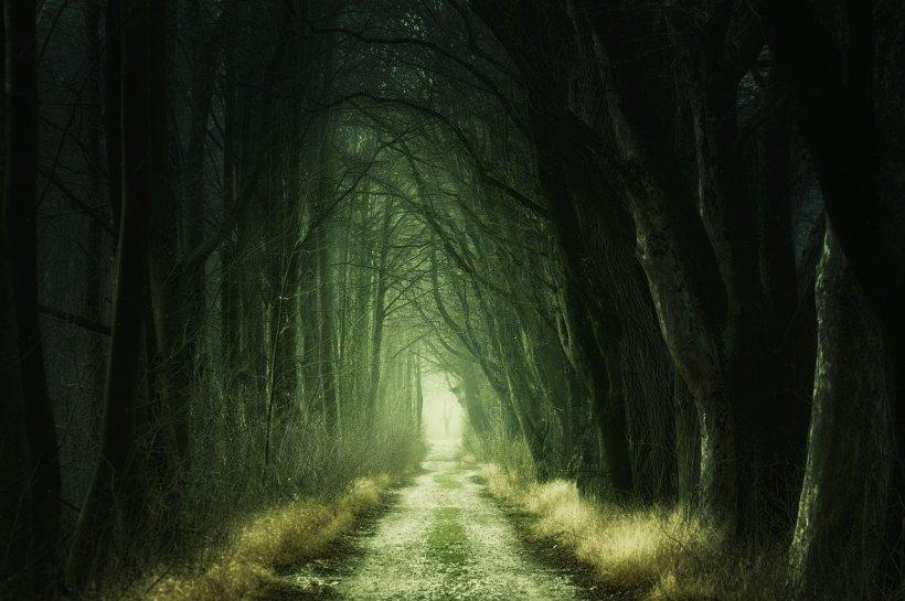 Descoperire șocantă într-o pădure din Vrancea. Un bărbat a fost găsit strivit de un tractor
