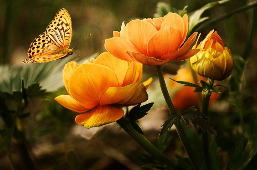 Mesaje de Florii. Cele mai frumoase mesaje, urări, sms-uri de Florii pentru cei dragi! La mulți ani!