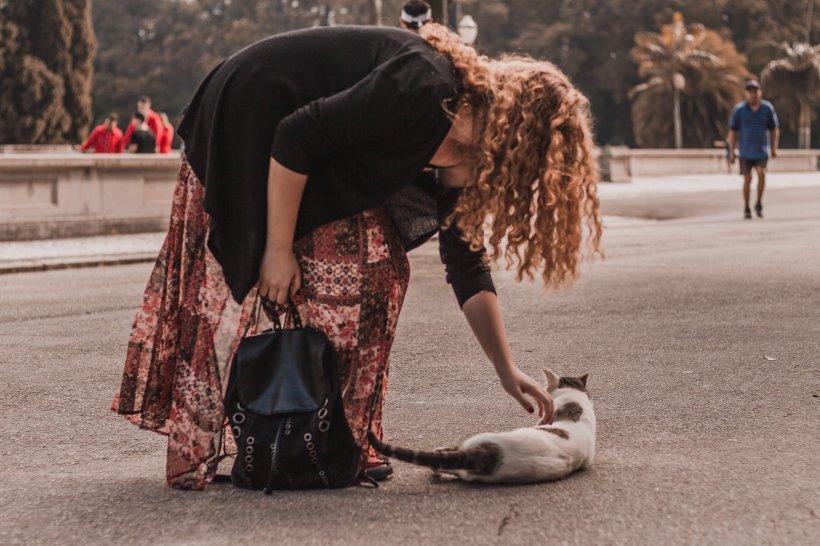 De ce nu trebuie să goneşti niciodată o pisică de la picioarele tale! Te poate ajuta cum nici nu te aștepți