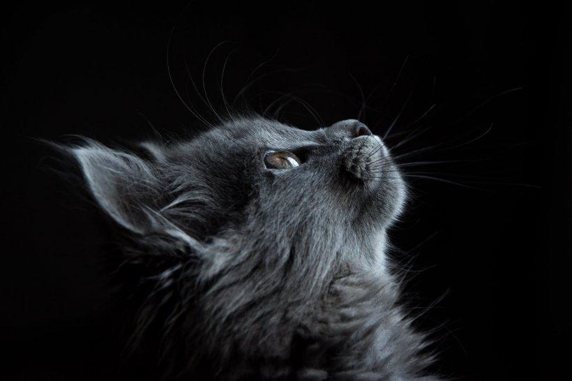 Imagini impresionante! O pisică a adoptat mai mulți pui de veveriță