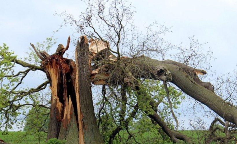 Natura s-a dezlănțuit în India. Peste un milion de oameni au fost evacuați din calea unui ciclon