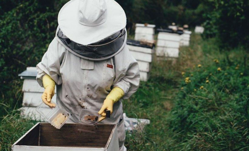 Albinele au îngheţat în stupi şi riscă să moară! Este semnalul de alarmă tras de apicultori 534