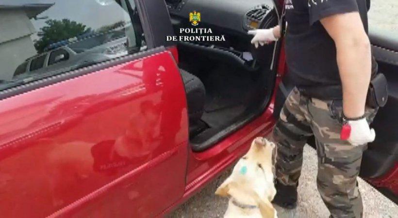 Câinele erou din Botoșani. Ce a descoperit în mașina unui bărbat (VIDEO)
