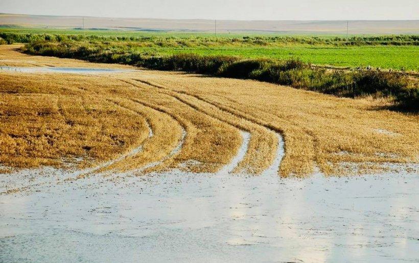 Guvernul Dăncilă sare în ajutorul agricultorilor afectați de vremea rea