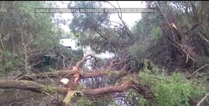 Situație revoltătoare în Delta Dunării. Zeci de copaci tăiați
