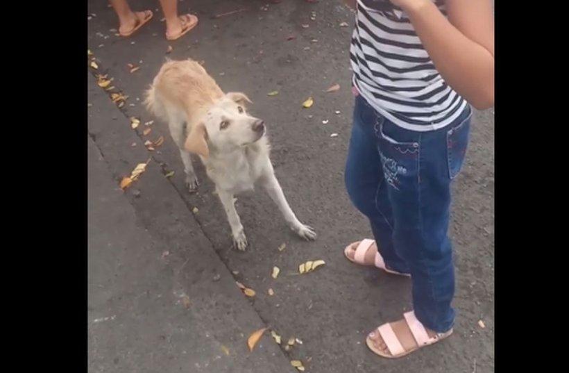 Cum cere un câine educat de mâncare. Clipul care i-a amuzat pe toți internauții (VIDEO)