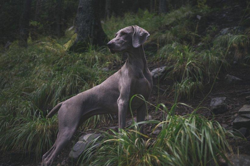 """Câinele a început să sape disperat cu lăbuțele în pământ. Bărbatul s-a apropiat și a înțeles cruntul adevăr: """"Doamne, încă mișcă!"""""""