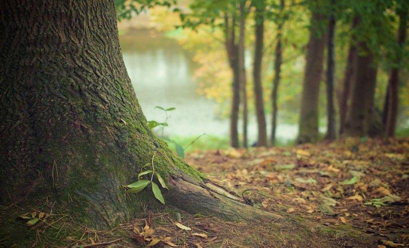 Descoperire macabră într-o pădure din Prahova. Modul halucinant în care a fost găsit cadavrul unei tinere de 19 ani