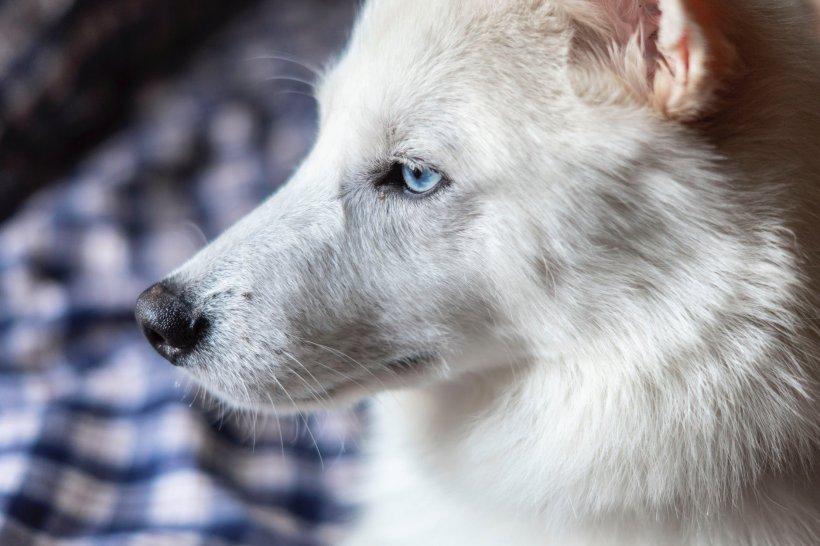 Fotografia care i-a cucerit pe internauți! El e câinele-asistent care îi face pe pacienți să se simtă mai bine