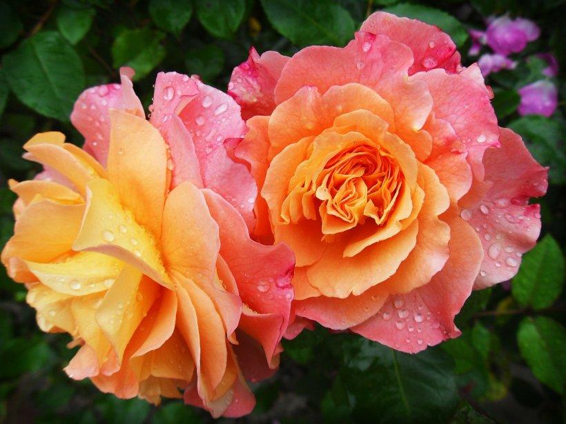 MESAJE DE SFINȚII CONSTANTIN ȘI ELENA. Cele mai frumoase mesaje, urări și felicitări pentru cei dragi