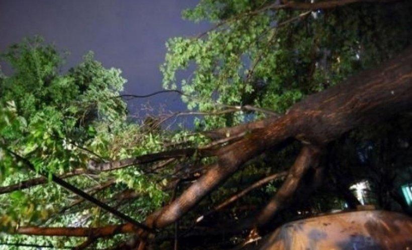 Vremea extremă a făcut prăpăd în vestul României. Vântul a rupt copaci și a smuls acoperișuri