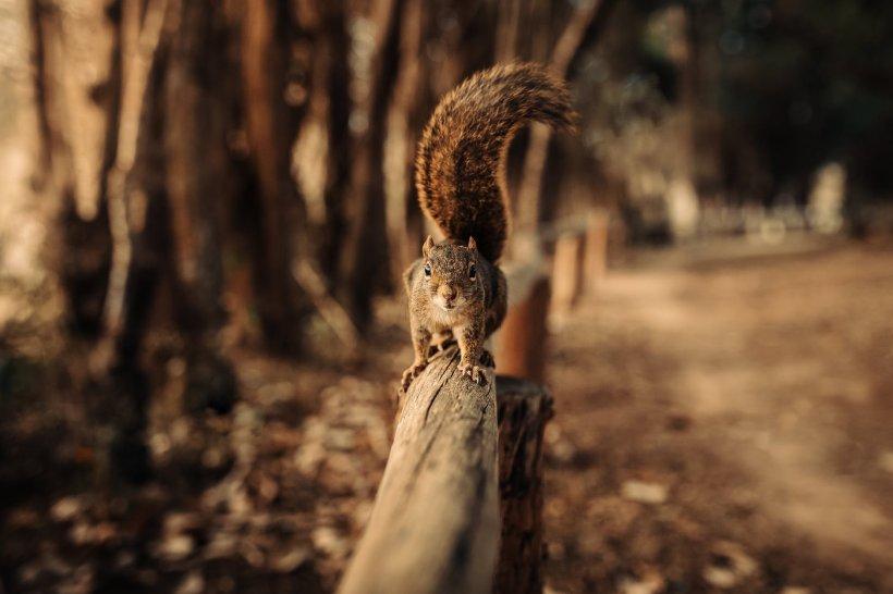 A ieșit prin parc să facă o plimbare, iar la scurt timp a avut parte de o adevărată surpriză. Ce i-a ieșit în cale fix când se aștepta mai puțin